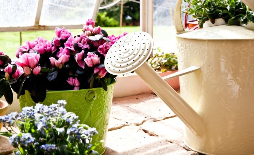 как правильно удобрять цветы