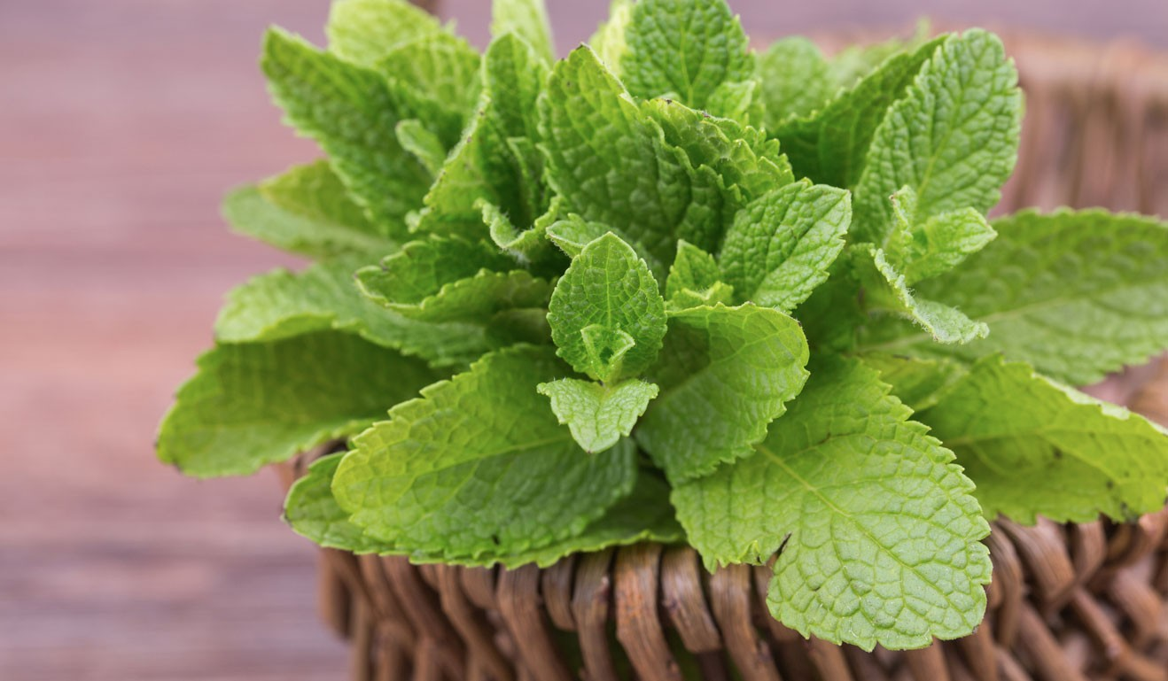 What make mint leaves a superfood