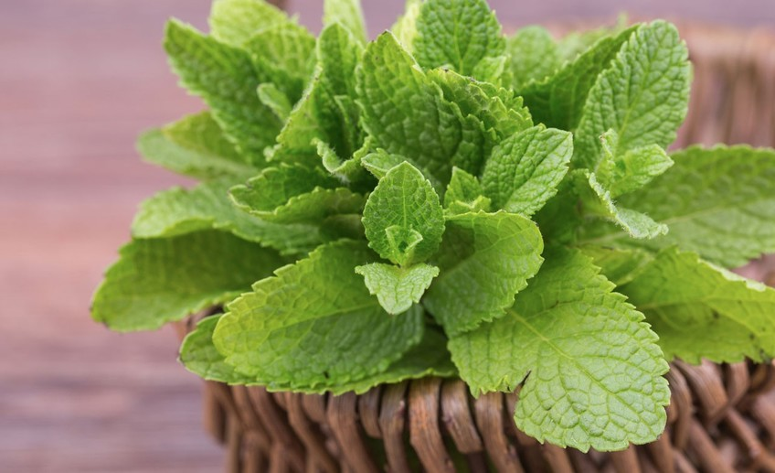 Usual what make mint leaves a superfood
