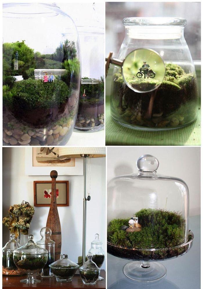 Закрытый террариум для растений своими руками