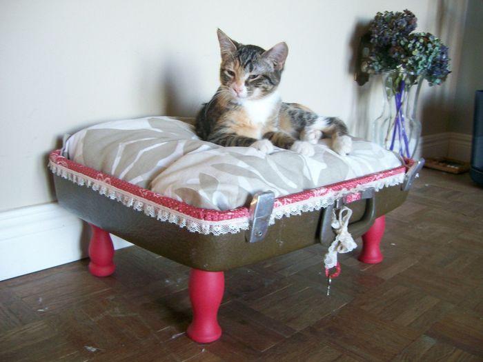 Как своими руками сделать кошке кровать