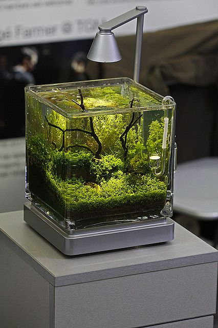 Как сделать аквариум мини