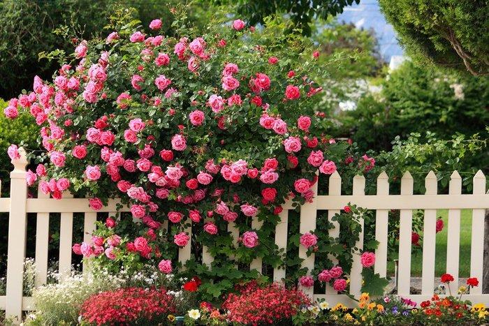 Сад в английском стиле своими руками