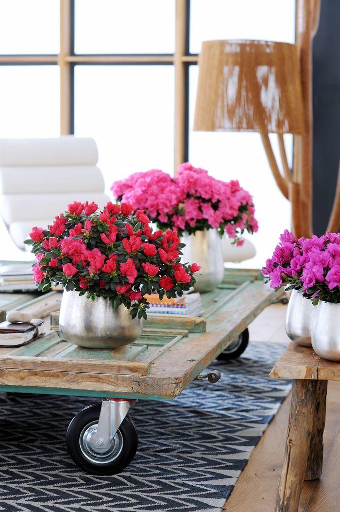 Фландрессе цветок
