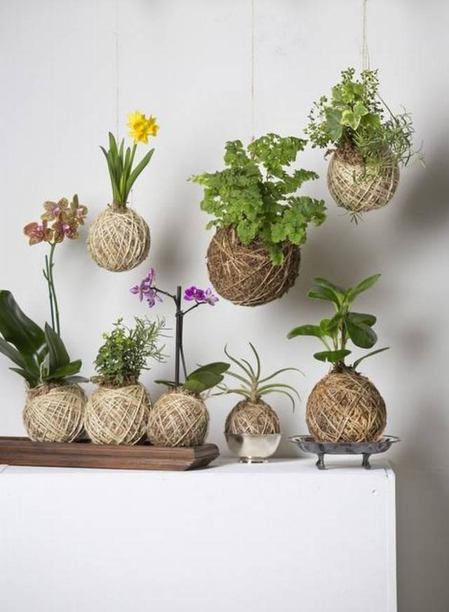 Как я побывала на ботанических посиделках, или Кокедама Кашалот своими руками 739