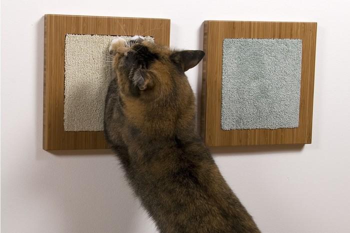 как отучить кошку царапать мебель и обои