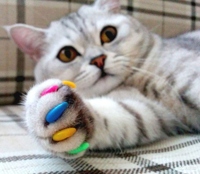 Чтобы кот не царапал диваны