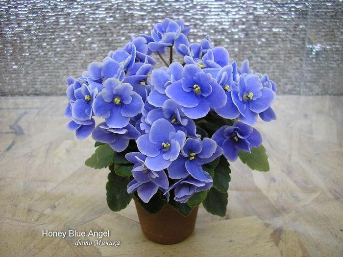 Праздничный фон с 3d цветы фиалок | Векторный клипарт | CLIPARTO | 525x700