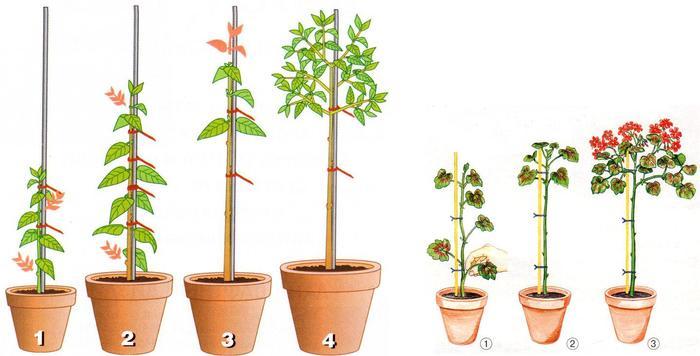 Как сформировать дерево на штамбе