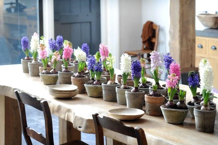 как вырастить гиацинты дома