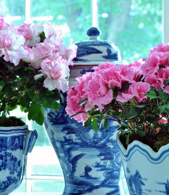 Комнатные растения которые нельзя держать дома