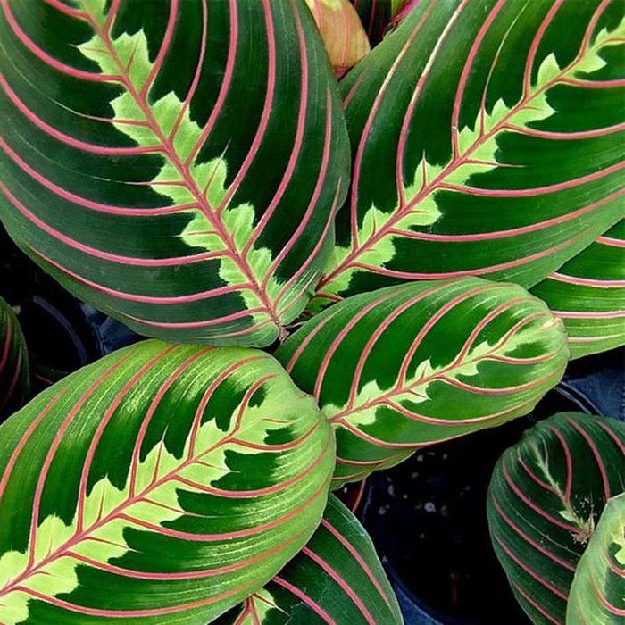 Однолетние тенелюбивые растения и цветы для сада фото и