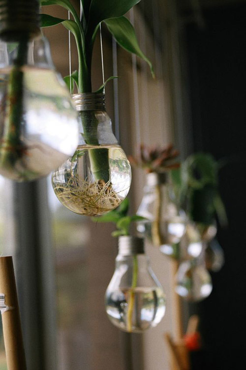 Как выращивать бамбук в домашних?