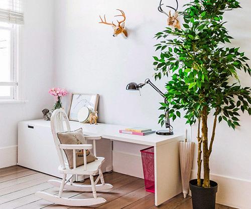 Большие комнатные растения фото